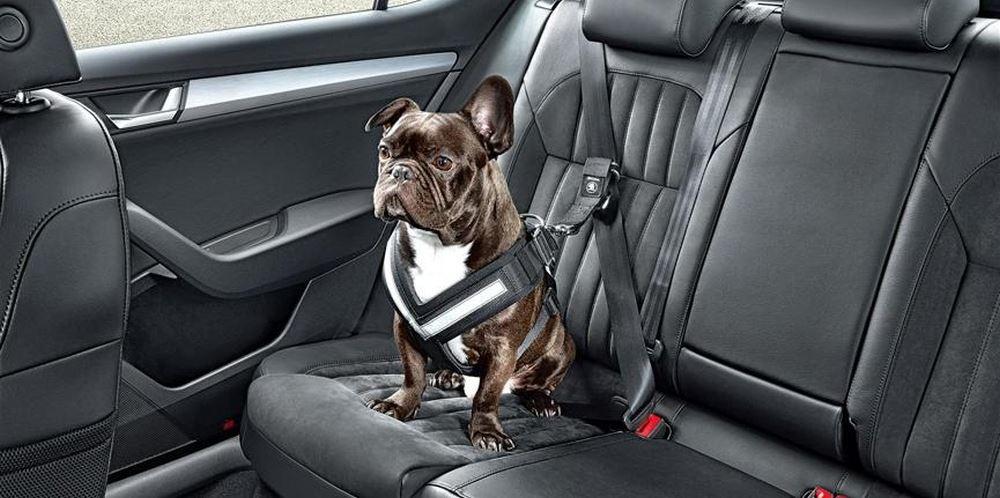 Cintura di sicurezza da auto per cani