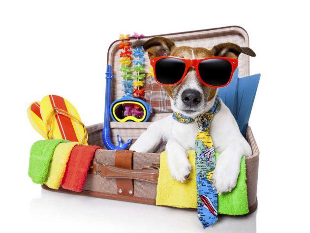 Alloggi e Hotel delle Isole Canarie che accettano animali domestici