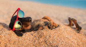 Viaggiare alle Canarie con il proprio cane o gatto