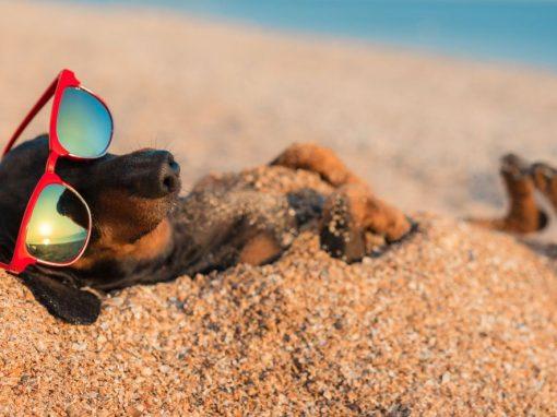 Viaggiare alle Canarie in aereo con il proprio cane o gatto